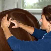 Wann, warum und wofür Physiotherapie für mein Pferd?